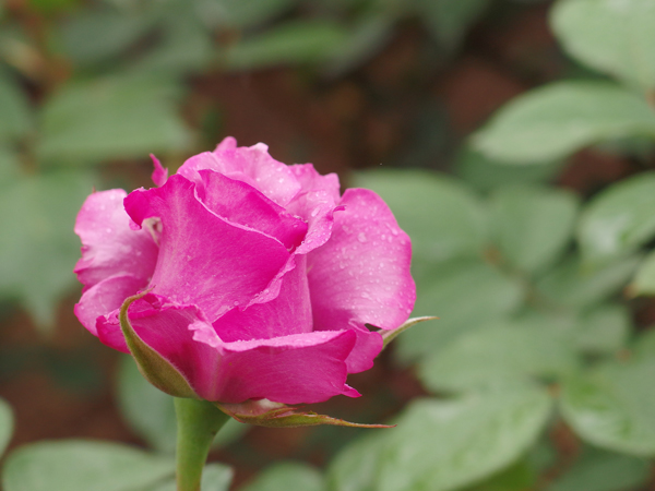 01_pink.jpg