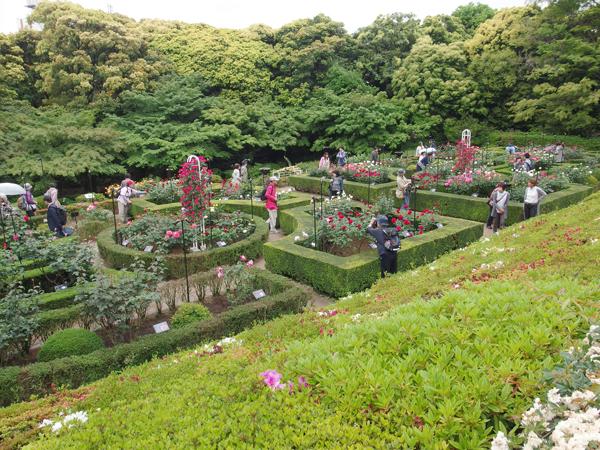 04_rosegarden.jpg