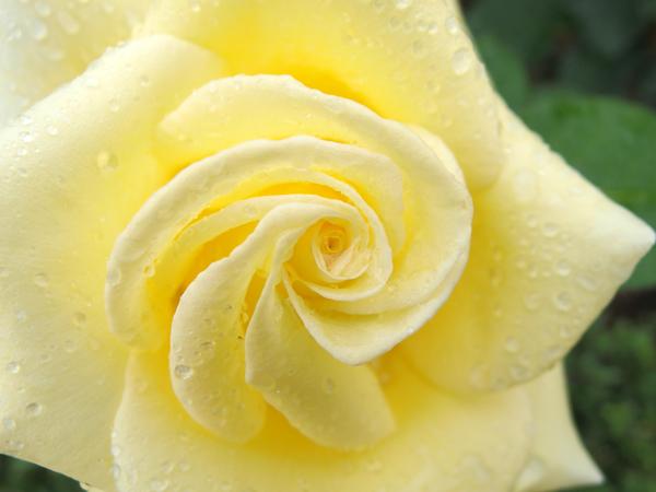 10_yellow.jpg