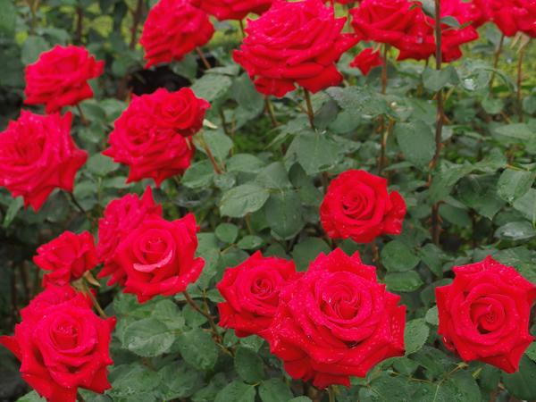 11_red.jpg
