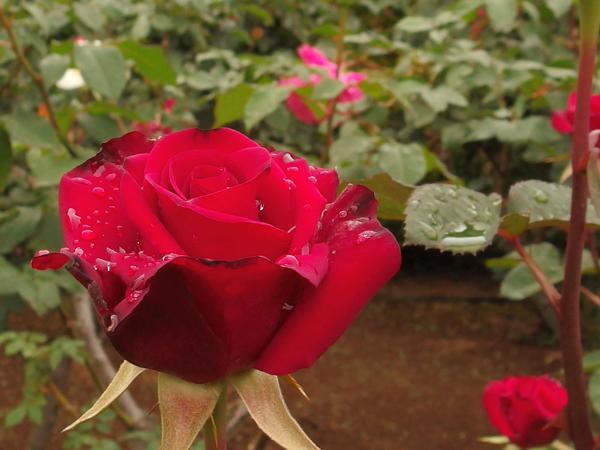 13_red.jpg