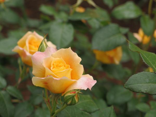 17_yellow.jpg